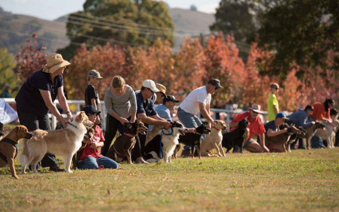 The Great Nundle Dog Race
